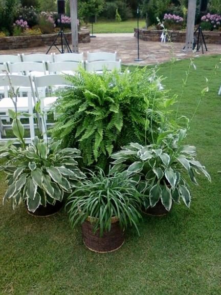 outdoor wedding with white chairs and a grouping of plants