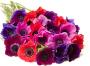Florists & Flowers in Lake Oswego, OR: Flowerbud.com