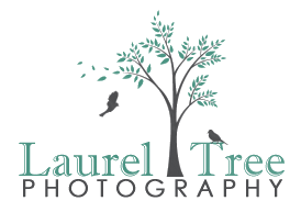 Portfolio image for Laurel Tree Photography