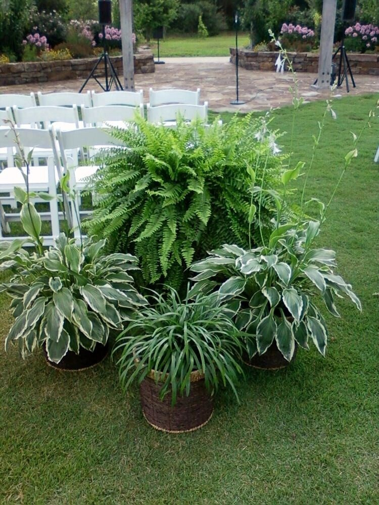Ask the experts how to have elegant decorations in an for Outside plants and shrubs