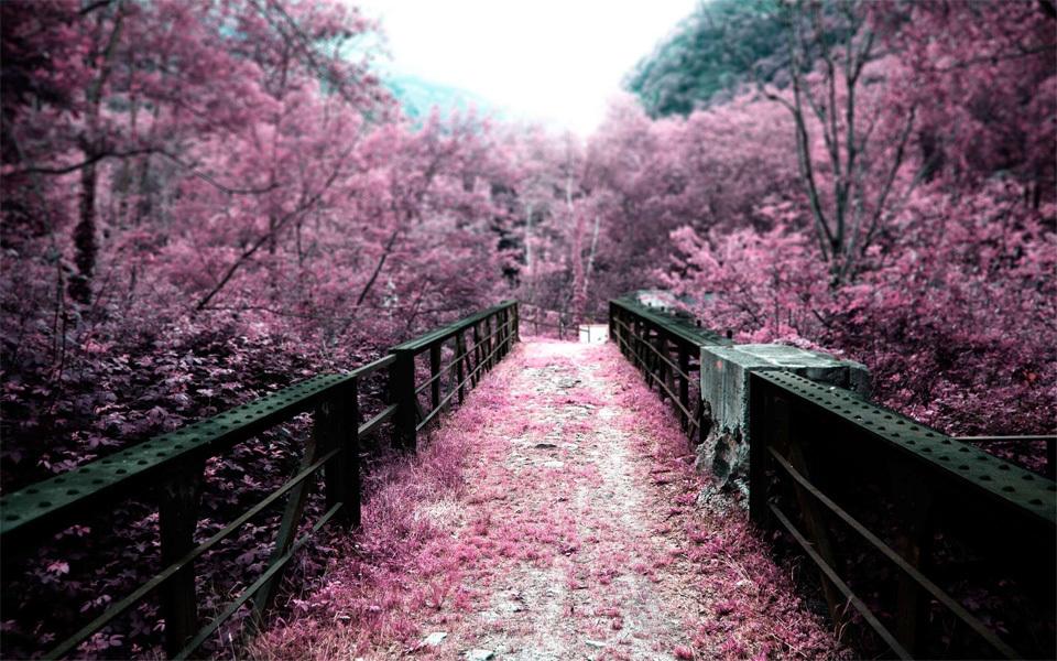 Pink-on-pink-wedding-color-inspiration.full