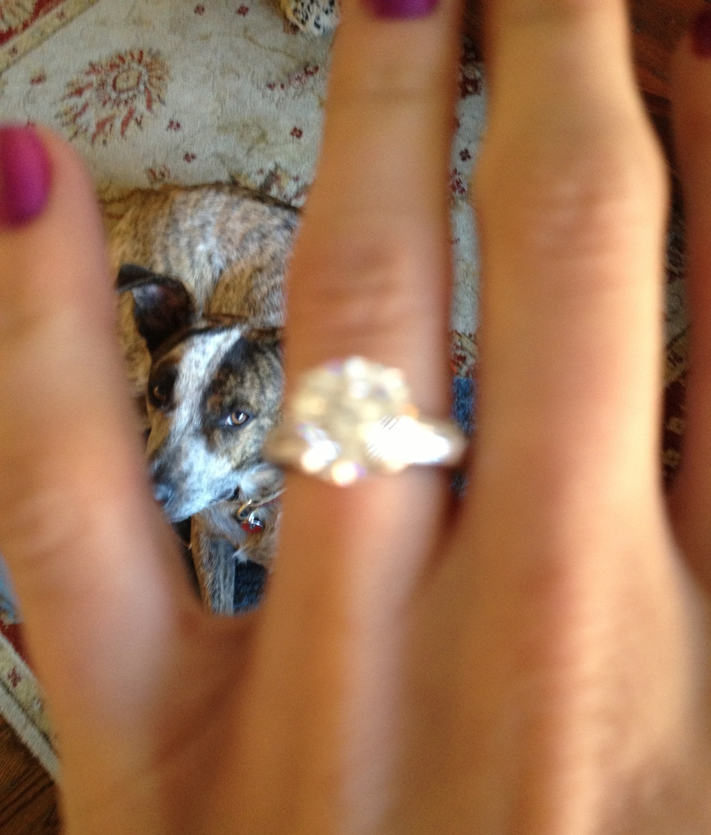 Funny Engagement Ring Shots envious puppy