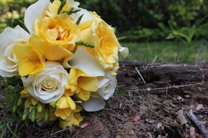 photo of Blush Custom Weddings
