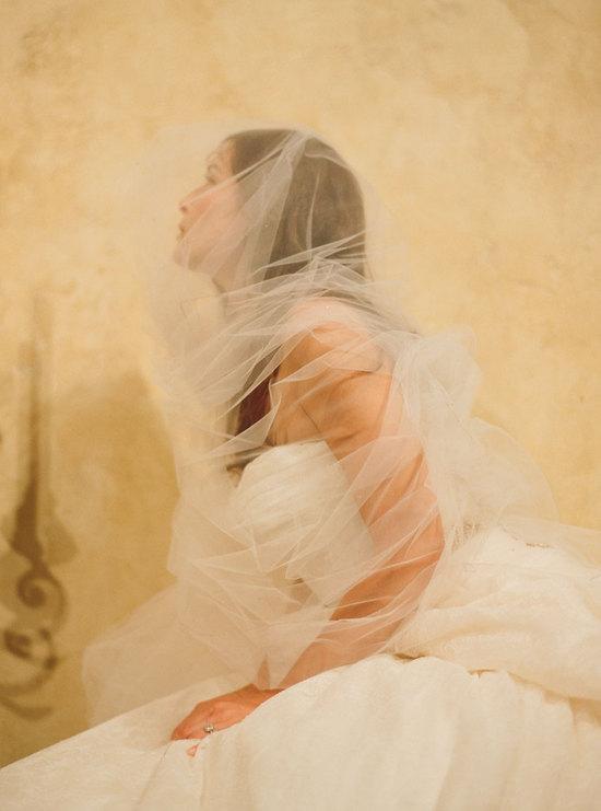 photo of Camelia