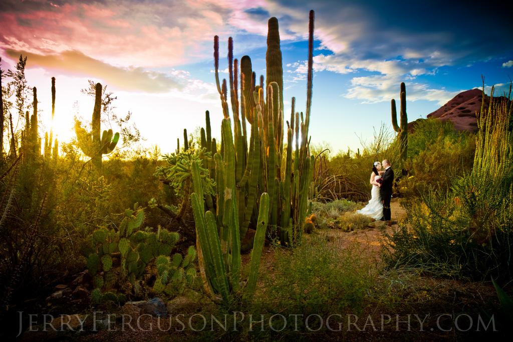 Desert-botanical-garden-wedding.full
