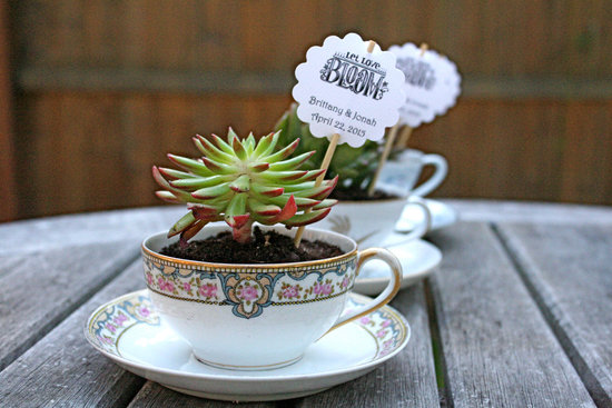 Succulents planted in teacups unique wedding favors