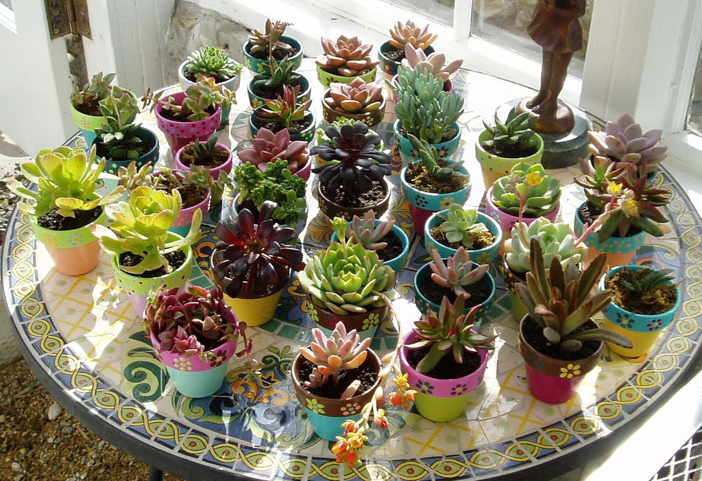 Assorted-potted-succulents-for-wedding-favors.full