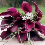 200 Mini and 50 Standard Callas Wedding Combo Package