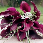 200_mini_and_50_standard_callas_wedding_combo_package_150.original
