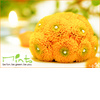 Mints-design-citrus-meringue-cupcakes-wedding-theme-green-orange-yellow-flowers-with-pearls-in-middle.square