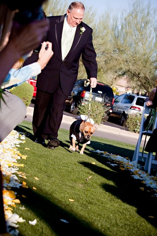 The faithful ring bearer