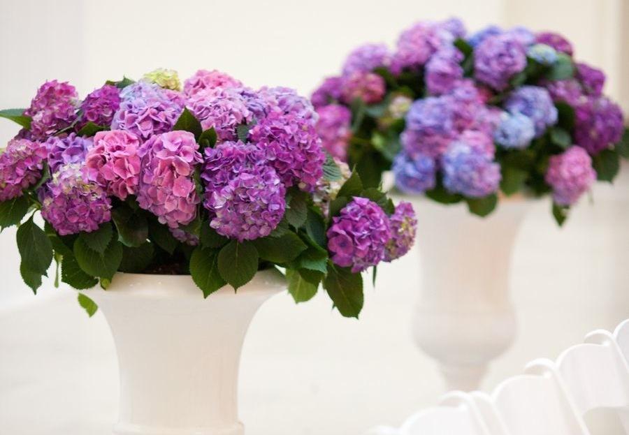 Purple-hydgrangeas-for-wedding-ceremony-decor.full
