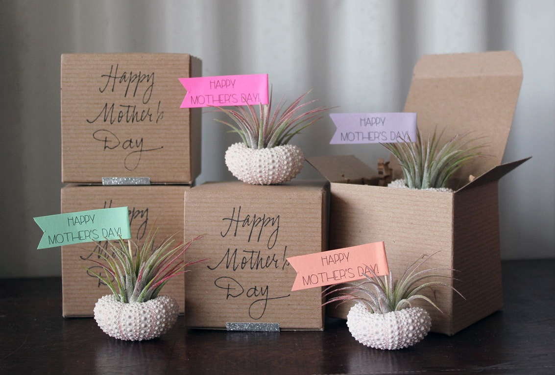 Wedding Gift Plant : Air Plant Garden mothers day gift ideas OneWed.com