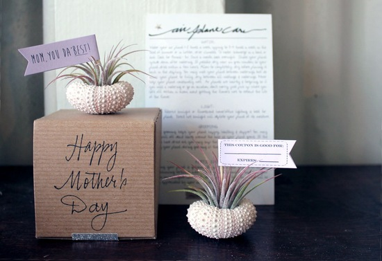 Air mail plant mothers day gift