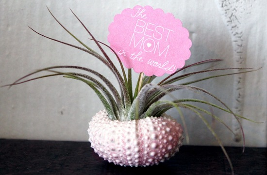photo of 17 Awesome Mother's Day Gifts for the MOB / MOG