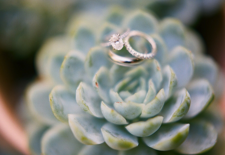 Oval-cut-engagement-ring-succulent-backdrop.full