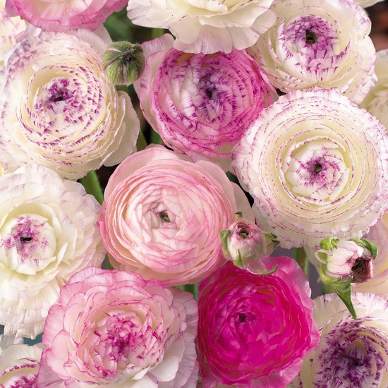 photo of wedding flowers pink and ivory ranunculus