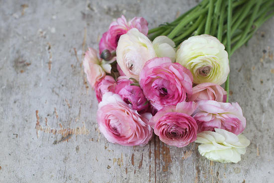 wedding bouquet of pink and ivory ranunculus