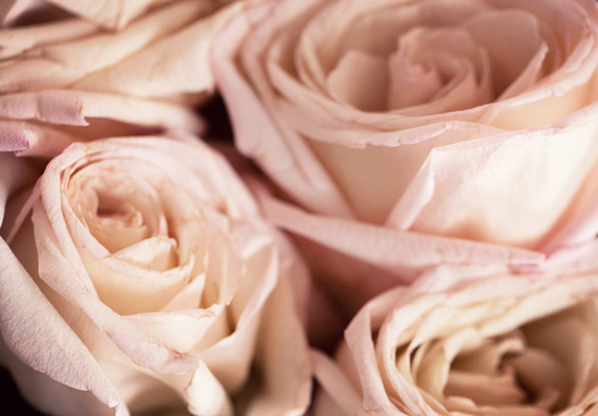 soft pink roses for romantic wedding arrangements