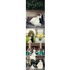 Ivory-vera-wang-wedding-dress-green-bridesmaids-dresses.square