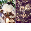 White-winter-wedding-flowers-centerpieces.square