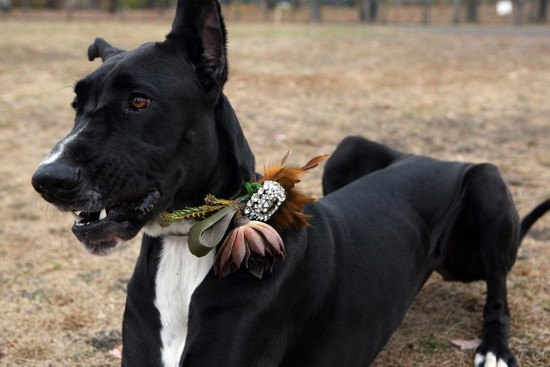 Ring bearer pup wears embellished collar