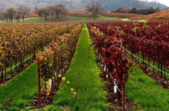 top honeymoon destinations sonoma CA