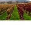 Top-honeymoon-destinations-sonoma-ca.square