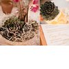 Eco-friendly-wedding-reception-centerpieces-succulents.square
