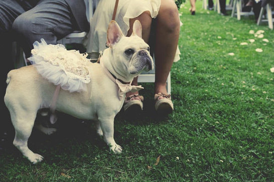 French Bulldog serves as flower girl and ring bearer