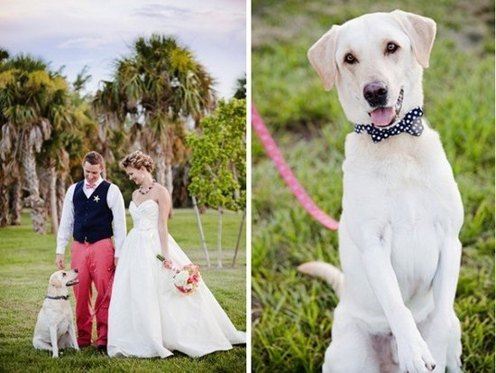 photo of Yellow lab serves as wedding day ring bearer