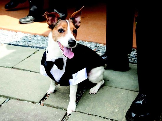 photo of Adorable puppy wears tux for his walk down the aisle