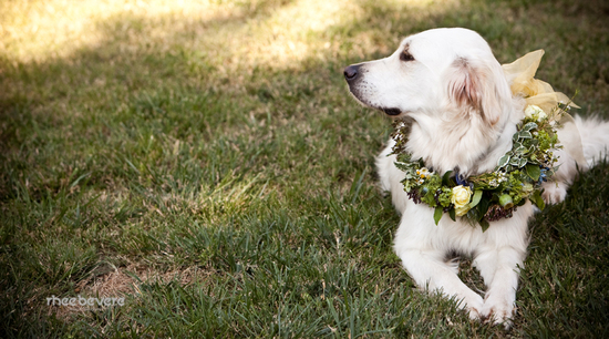 Dog of Honor wears floral and succulent collar