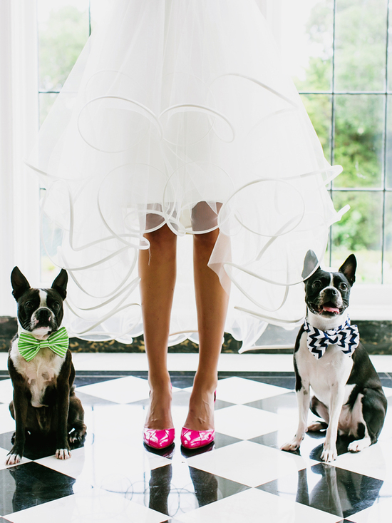 photo of Bride poses in bright pink heels with dogs at her side