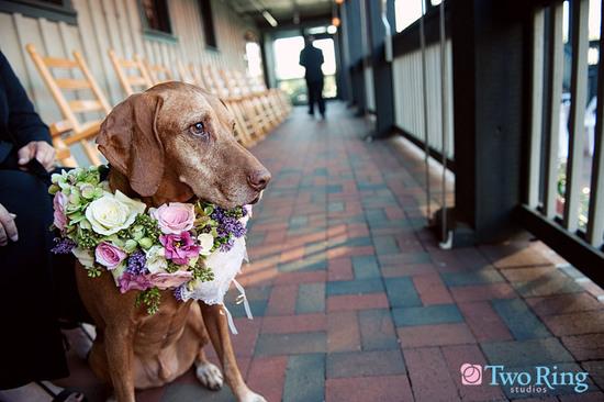 photo of Sweet dog wears collar of fresh wedding flowers