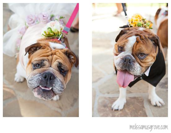 photo of Bulldog flower girl and ring bearer walk down the aisle