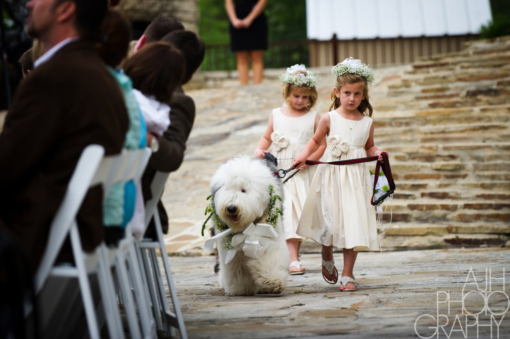 Wheaton Terrier walks the wedding aisle with junior bridesmaids