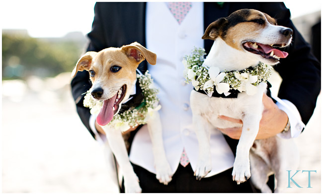 Puppy ring bearers wear babys breath collars