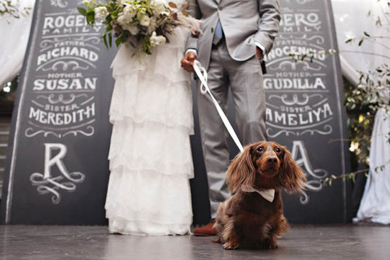 Bride and groom pose in front of custom backdrop with pup