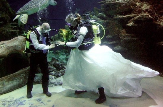 Sensational real wedding photos- underwater wedding ceremony