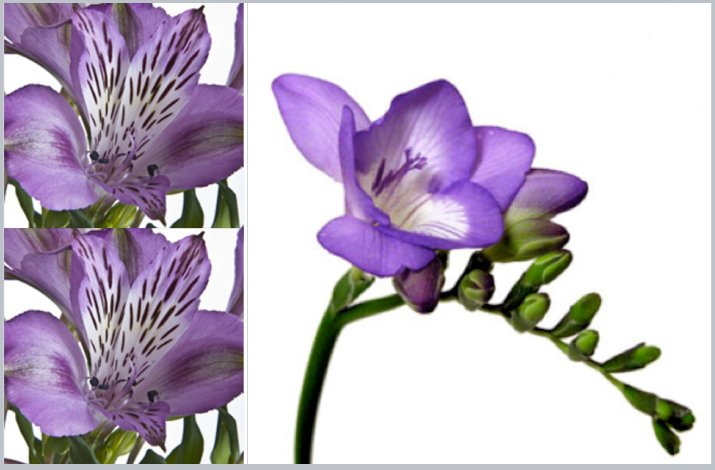 Freesias-sweetpear-wedding-flowers.full