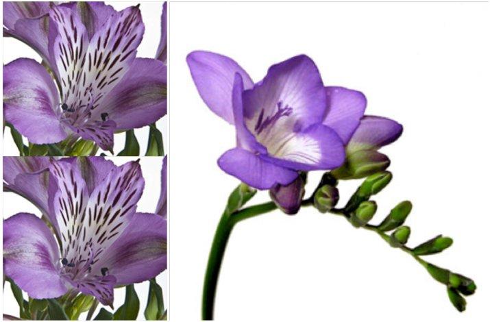 Diy-wedding-flowers-purple-freesias.full