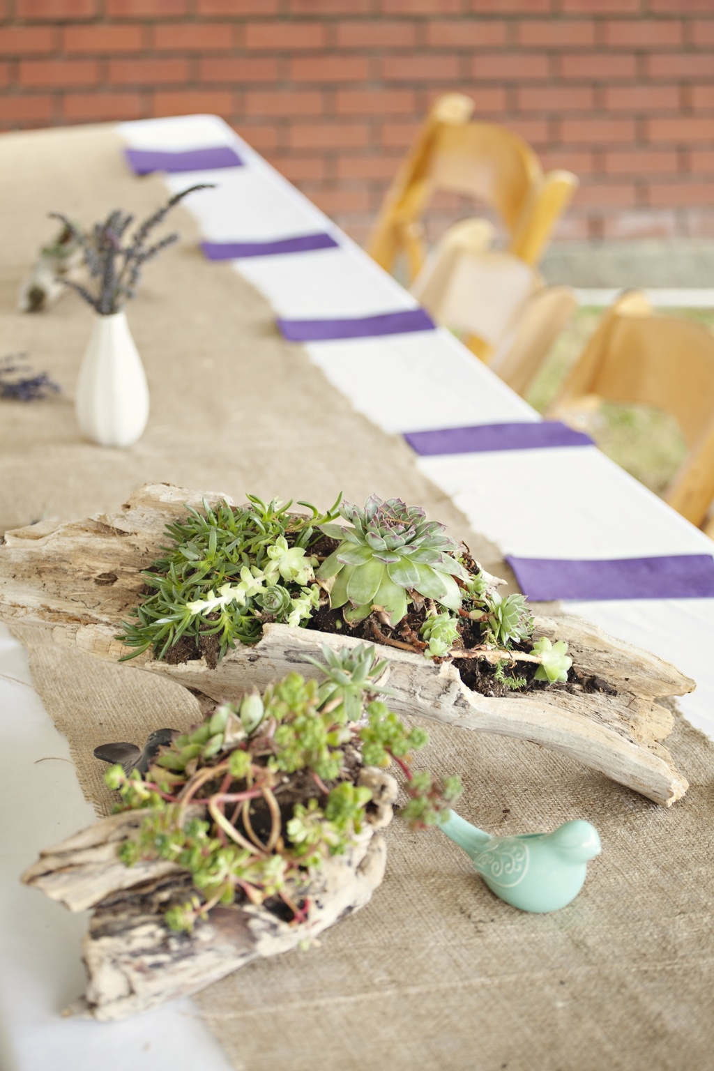 Outdoor-casual-wedding-2012-succulent-centerpieces.full