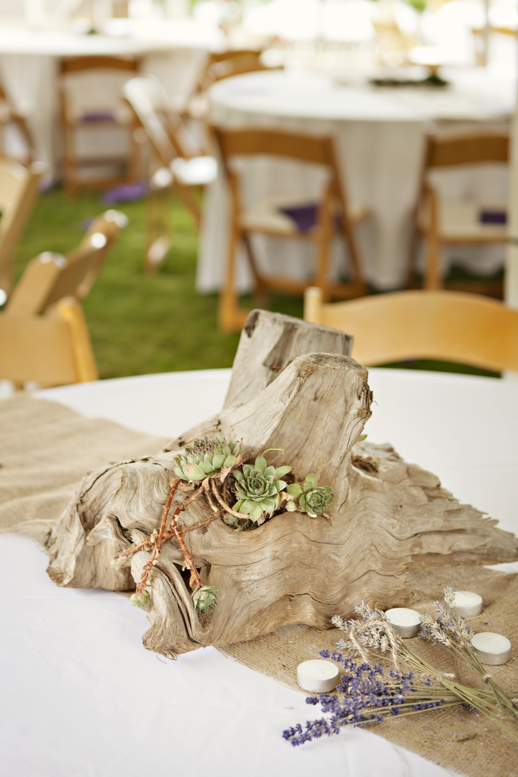 Eco-friendly succulents adorn wedding reception tables