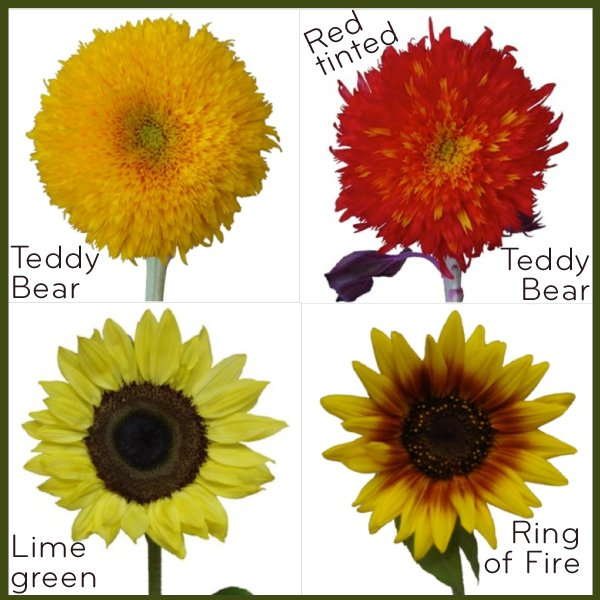 Unique-wedding-flowers-sunflowers-for-fall-weddings.full