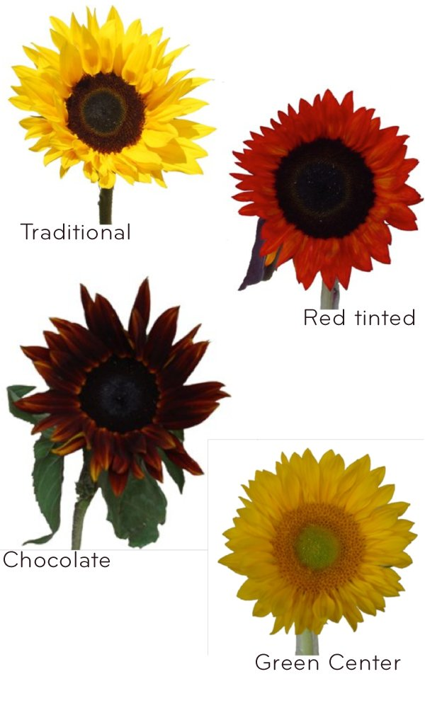 photo of Sunflowers for a Sunny Wedding Day