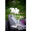 Outdoor-wedding-reception-black-white-damask-purple-wedding-flowers.square