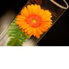 Real-weddings-new-york-wedding-photography-orange-wedding-flowers-simple-centerpieces.square