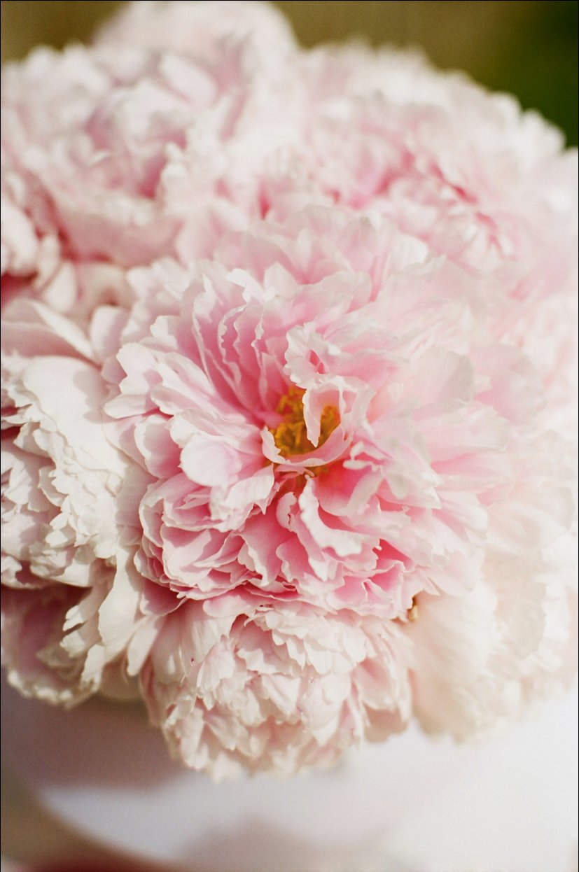 Pink-peonies-wedding-flower-ideas.full