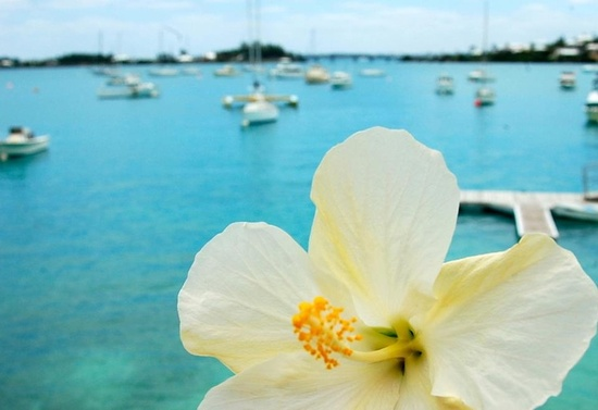 Honeymooning in Bermuda wedding planning tips 1